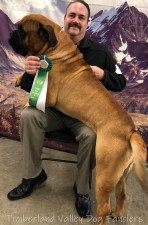 GCH BarbEric's Warrior Bane - Bull Mastiff - Best of Breed
